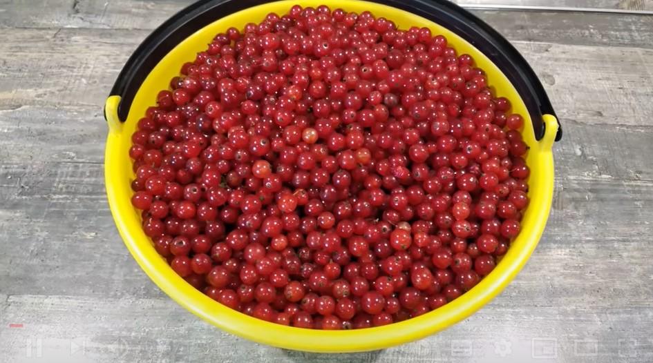 Варю Бурштиновий джем густим і ароматним: новий рецепт! Джем із червоної смородини